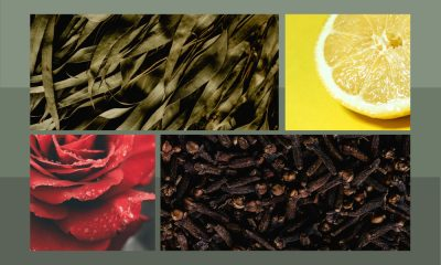 images of cloves, eucalyptus, lemon and rose.