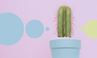 An image of a cactus in a small pot, representative of a penis, set against a purple background with blue circular motifs