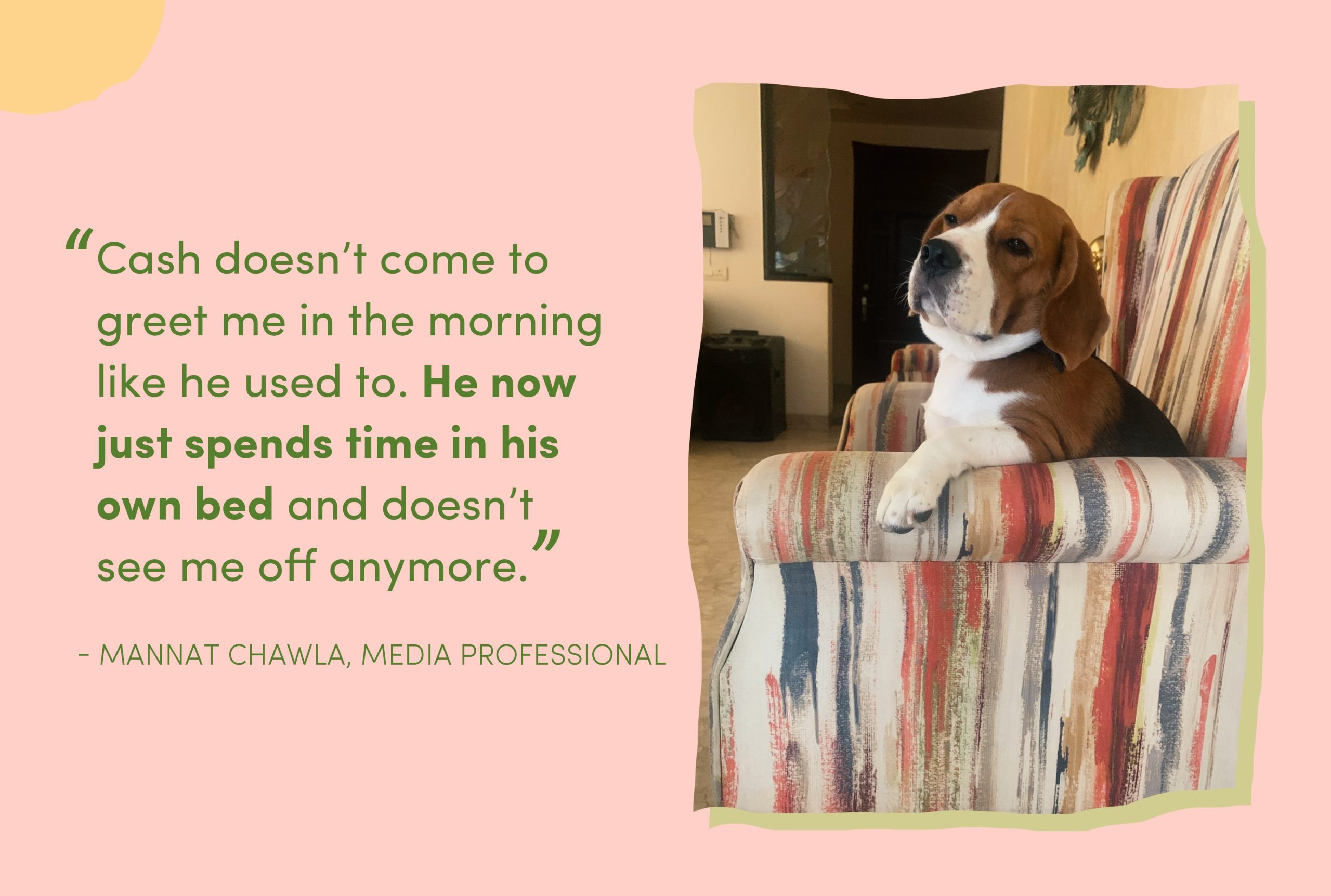 """Image showing Cash, the four-year-old beagle sitting on a couch, with text next to him that reads: """"Cash doesn't come to greet me in the morning like he used to. He now just spends time in his own bed and doesn't see me off anymore,"""" - Mannat Chawla, Media Professional"""